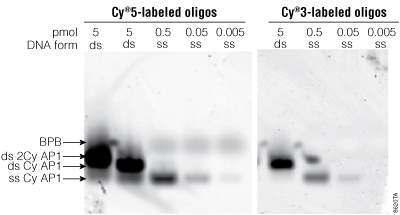 Detection sensitivity of Cy5- and Cy3-labeled DNA oligos.